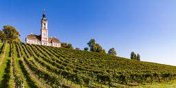 Germany, Baden-Wuerttemberg, Lake Constance district , Birnau Basilica and vineyard - WDF04532