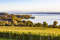 Germany, Baden-Wuerttemberg, Lake Constance near Ueberlingen, vineyards - WDF04541