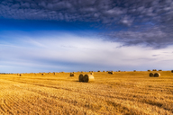 United Kingdom, Scotland, East Lothian, field and hay bales in the evening light - SMAF00996