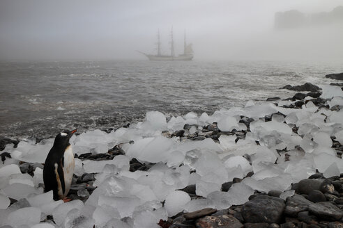 Penguin looking away while standing amidst ice on shore by sea during foggy weather - CAVF31678