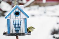 Small bird eating from blue feeder - FOLF05943