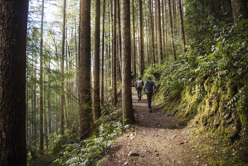 Rear view of hikers walking on dirt footpath in forest - CAVF32240