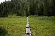 Boardwalk in forest - CAVF32261