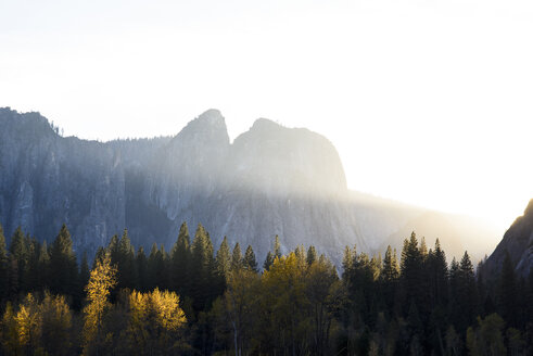 Low angle view of trees by mountain against clear sky - CAVF32273