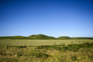 Scenic view of green landscape against clear blue sky - CAVF32303