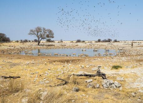 Africa, Namibia, Etosha National Park, Okaukuejo, waterhole - RJF00782