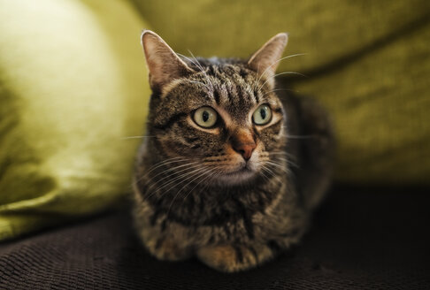 Portrait of tabby cat lying on the couch - RAEF01990