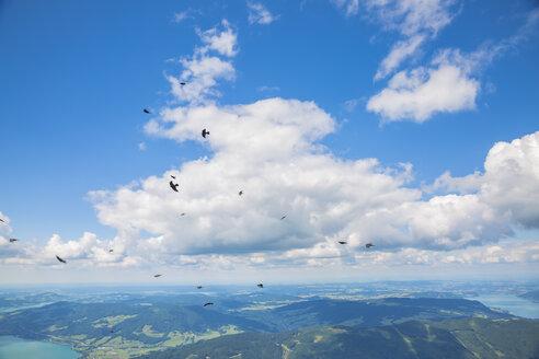 Austria, flying birds - AIF00463