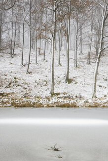 Bare beech trees in winter forest by frozen lake - FOLF07159