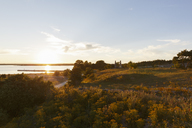 Grassy landscape at sunset - FOLF07216