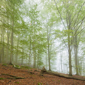 View of forest at Soderasen National Park - FOLF07977