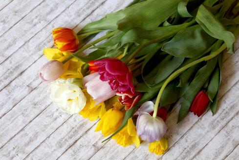 Tulips - JTF00966