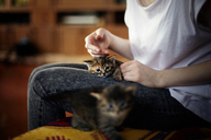 Midsection of woman petting kitten while sitting at home - CAVF34244