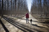 Rear view of man walking with Siberian Husky on dirt road amidst bare trees during winter - CAVF34418