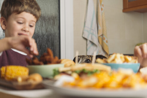 Dog watching boy eating at dining table at home - SKCF00390