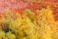 Spain, Wicker cultivation in Canamares in autumn, blurred - DSGF01707