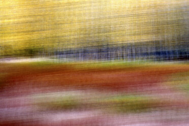 Spain, Wicker cultivation in Canamares in autumn, blurred - DSGF01713