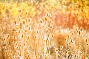 Spain, Wicker cultivation in Canamares in autumn, blurred - DSGF01722