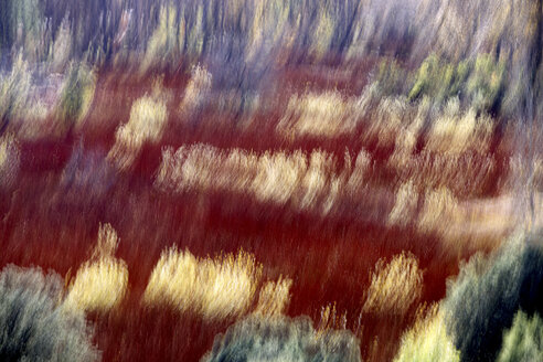 Spain, Wicker cultivation in Canamares in autumn, blurred - DSGF01734