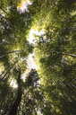 Low angle view of trees in forest - CAVF35052