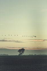 Germany, East Frisia, Birds flying over field - DWIF00902