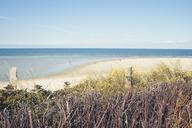 Germany, Spiekeroog, dunes and beach - DWIF00909