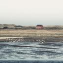 Germany,  Spiekeroog, seaside with flock of birds - DWIF00912