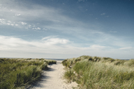 Germany, Spiekeroog, path through dunes - DWIF00915