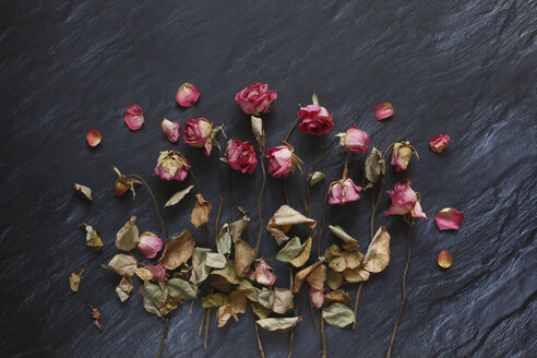 Withered roses on slate - JTF00973