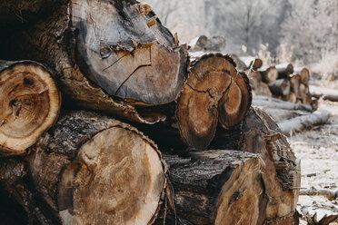 Stack of wood - OCAF00169