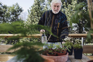 Senior man watering potted plants at table in yard - MASF02108