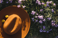 Hat in flower meadow - KKAF00940