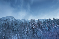 Low angle view of snow covered trees against sky at Wells Gray Provincial Park - CAVF35744