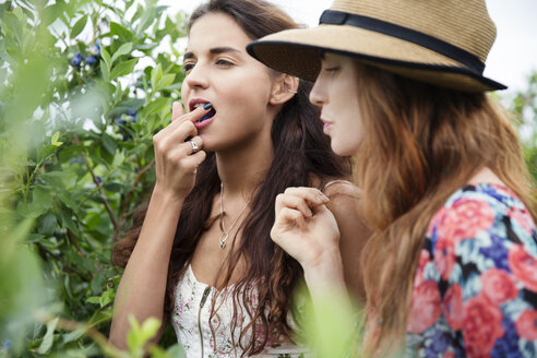 Woman eating blueberry while standing with friend at farm - CAVF35974