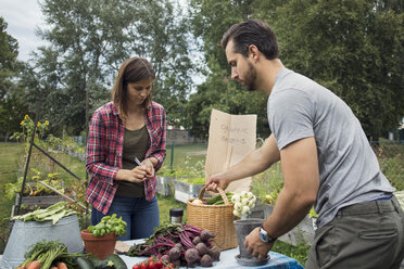 Mid adult couple arranging garden vegetables on table - MASF02254