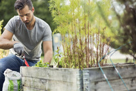 Mid adult man planting in urban garden - MASF02260