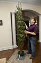 Man looking at Christmas tree while standing at home - CAVF36261