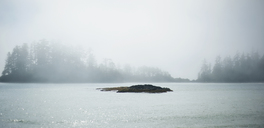 Scenic view of lake against trees during foggy weather - CAVF36282