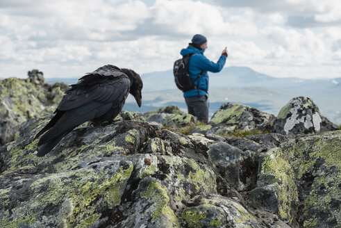 Close-up of raven perching on rock with person standing in background - MASF03202