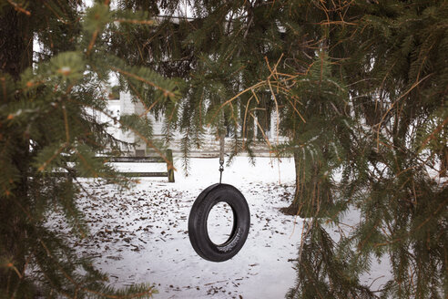 Tire swing hanging from tree at playground - CAVF37467