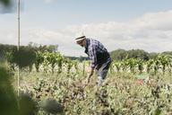 Mature gardener digging with shovel at farm - MASF03484