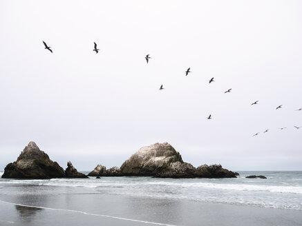 Birds flying over sea - CAVF38131