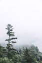 High angle view of sea amidst trees during foggy weather - CAVF38255
