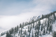 Scenic view of trees growing on snow covered mountain against sky - CAVF38258