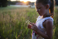 Girl looking at flowers in farm during sunset - CAVF38354