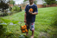 Low section of boy holding pumpkins in bucket while standing in yard - CAVF38402