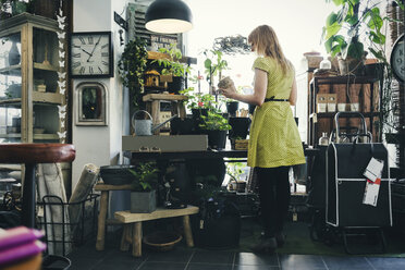 Rear view of woman working in interior design shop - MASF03959