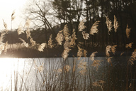 Germany, lake and reed in the evening light - JTF00982