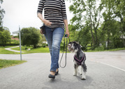 Low section of senior woman walking with dog on street - MASF04333