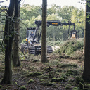 Earth mover lifting fallen tree in woodland - MASF04366